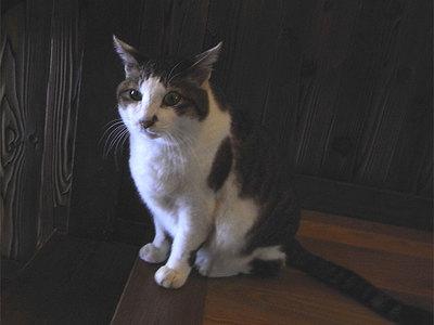 新潟の宿で出会った猫