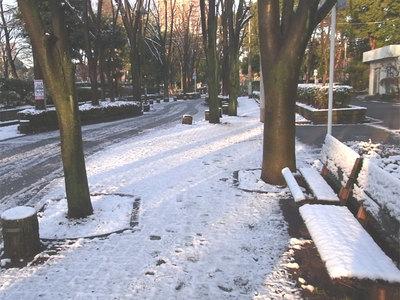 出勤途中の雪景色
