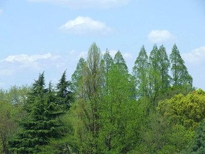 窓から見える樹々の緑