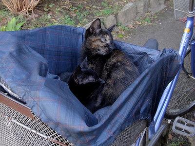 自転車のカゴの中の仔猫