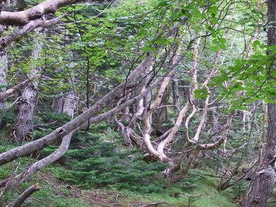 五合目観察路樹林帯