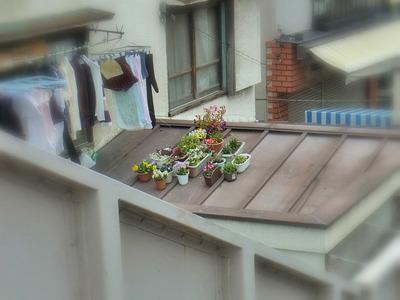 屋根の上の花