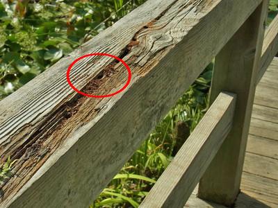 ハキリバチの巣穴