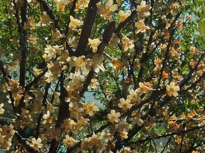 花のイルミネーション