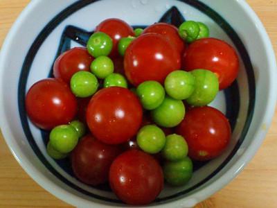 トマト&トマティージョ