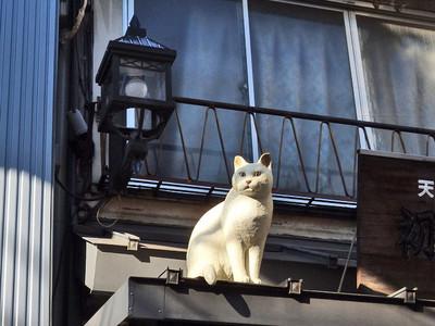 谷中銀座のネコ