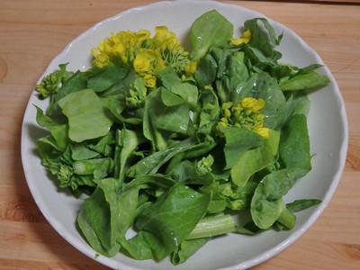 白菜の茎立ち