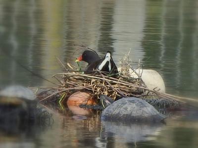 巣篭りバン