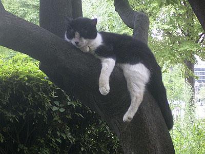 樹の上で眠る猫 '04/08/04 東京都北区