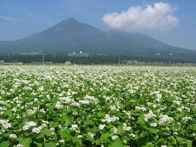 磐梯山麓に広がる蕎麦畑