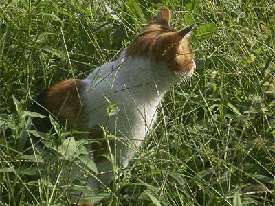 公園の草むらで見かけた猫