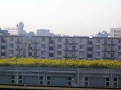 d051025-seitakaawadachi