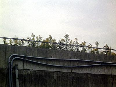 d051029-seitakaawadachiso2