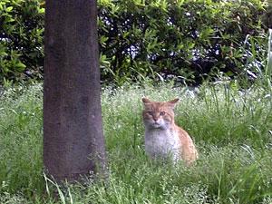 草むらの猫 '04/04/13 東京都港区