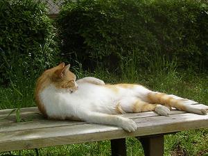 ベンチでくつろぐネコ