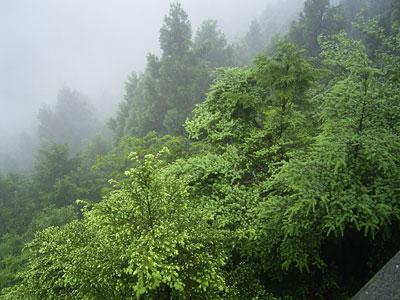 大岳山荘からの眺め '03/07/21