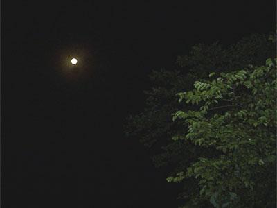 満月に近い月 '04/07/31 東京都奥多摩