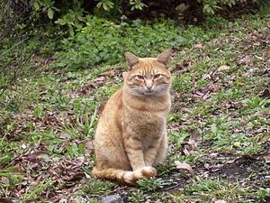 こちらに顔を向けた猫 '04/03/25 東京都日比谷公園