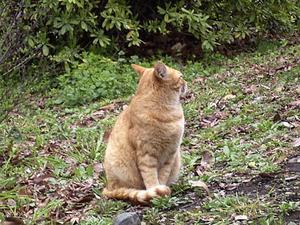 そっぽを向いてる猫 '04/03/25 東京都日比谷公園