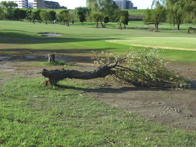 ゴルフ場内の倒木