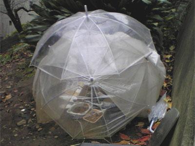 ビニール傘のねこハウス