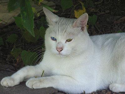 木陰の猫(顔アップ)