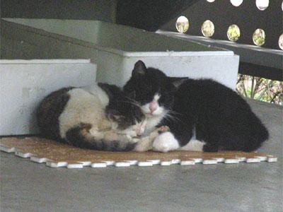 階段下で丸まる猫たち