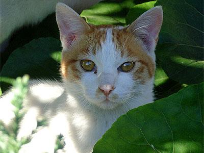 こっちを見つめる猫