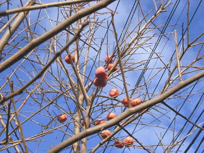 枝に残った柿の実