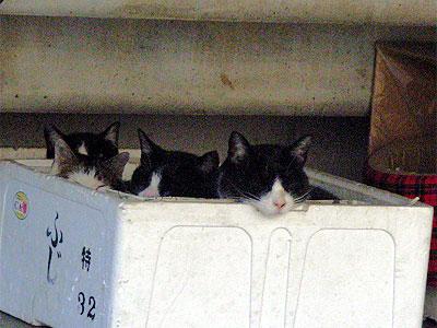 発泡スチロールの箱の中の猫たち