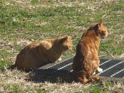 公園で見た2匹の猫