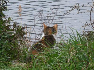 川辺にたたずむ猫