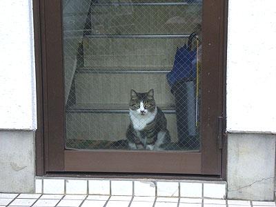 ドアの向こうからこっちを見ている猫