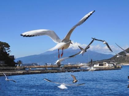 カモメかぶりの富士山