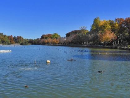 池の鳥たち