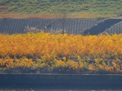 青水門あたりの景色