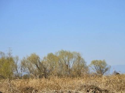 河川敷の景色