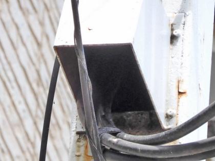 ムクドリの巣