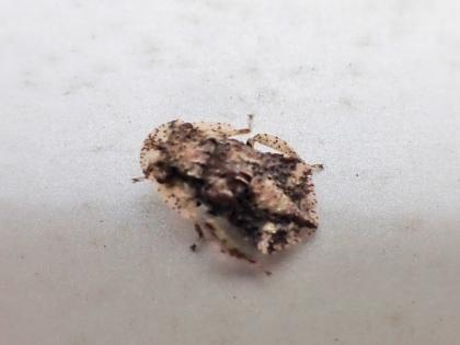 ミミズクの幼虫